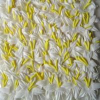 Гладиолусы белые