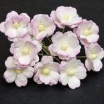 Флоксы детский розовый, 10 шт, 1,5 см