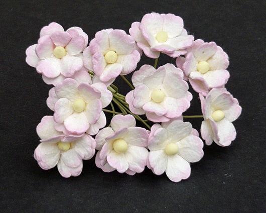 Флоксы детский розовый