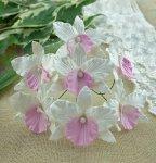 Орхидея белая с розовым