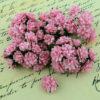 Астры 1,5 см, нежно розовый, 10 шт.